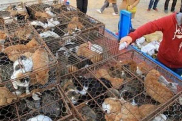 Rescatan 500 gatos que iban a ser cocinados en restaurantes en China