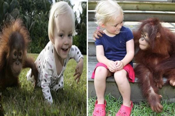 COSAS DE LA VIDA: Niña y orangután, amigos inseparables desde hace seis años