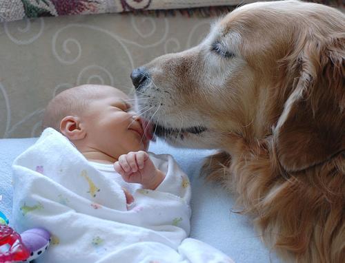 CRÉALO: En Tainlandia,  perro salva la vida de una bebé abandonada