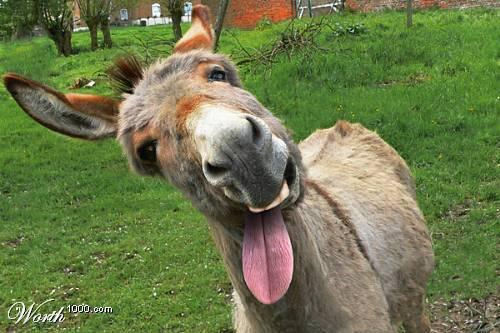 Escogen burro como candidato de Alcalde