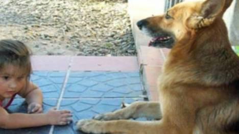 En Argentina,  perra salvó a una nena de morir ahogada