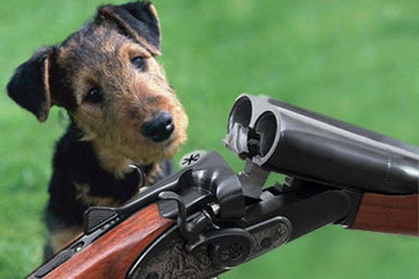 Argentina: su perro accionó una escopeta y lo mató