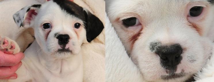 Perro se parece a Hitler. ¡Increíble..!