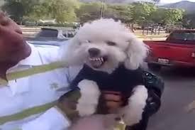 Perro se enoja cuando le preguntan si es chavista (Video)