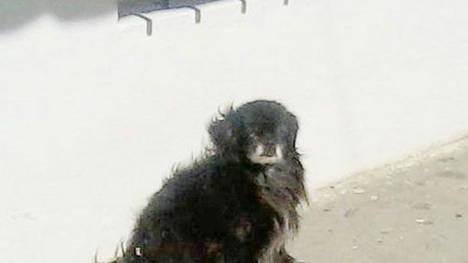 Argentina: Trágico final del perro que pasó 9 años junto a la tumba de su dueño