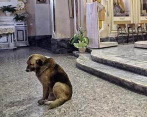 El perro que amaba a los hombres: LECCION DE VIDA…