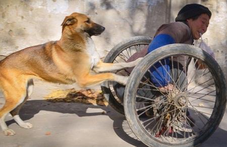 Increíble: Perro fiel ayuda a empujar a su dueño paralizado (Video)