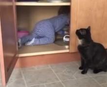 Video Viral: El vídeo de un gato que encierra a un bebé en el armario se vuelve viral