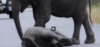 Solidaridad animal. VIDEO INCREÍBLE…