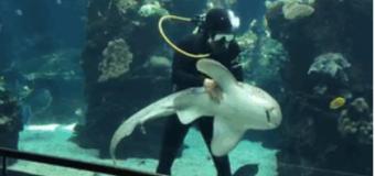 VIDEO: Bebé tiburón recibe caricias como si fuera una mascota…