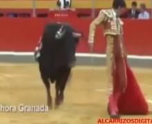 VIDEO: Torero muy confiado, terminó bien corneado…