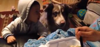 ES INCREIBLE: Perro dice mamá por comida. VIDEO…