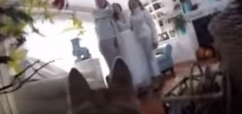 VIRAL DE LA SEMANA: Perro graba boda de amos…