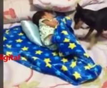 VIDEO: No creerás lo que hace este perrito…