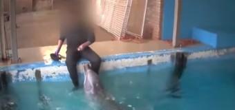 """INCREÍBLE: Captan empleado """"pervirtiendo"""" delfín. VIDEO…"""
