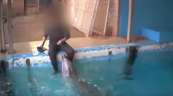 sex-delfin