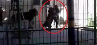 VIDEO: León atacó y mató al domador durante un show para niños
