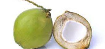 MIRA POR DÓNDE le entra el agua al coco, según un experto…