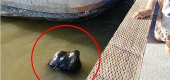 ATERRADOR: lobo marino captura a una niña y se la lleva bajo el agua…