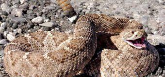 ¡INSÓLITO! Serpiente muerde en Florida a hombre que quiso besarla