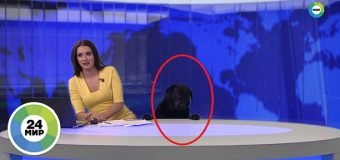 Perro interrumpe noticiero; conductora continua informando…