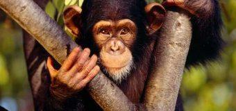 Donde viven los monos ¡No lo podrás creer!…