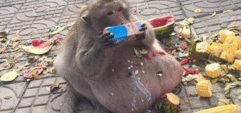 Mira lo que sucede con la comida chatarra y los animales…