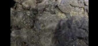 NO TODO FUE MALO CON MARÍA; nacen 52 tortugas en Güibia. VIDEO…