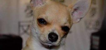 JAMÁS SOPLES la cara de los perros…