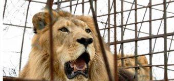 León mata una trabajadora de zoológico en EEUU