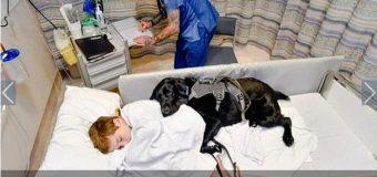 Mahe, el perro que cuida a su dueño autista en la camilla de un hospital