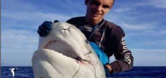 Pescan una cabeza de tiburón arrancada por un enorme depredador desconocido